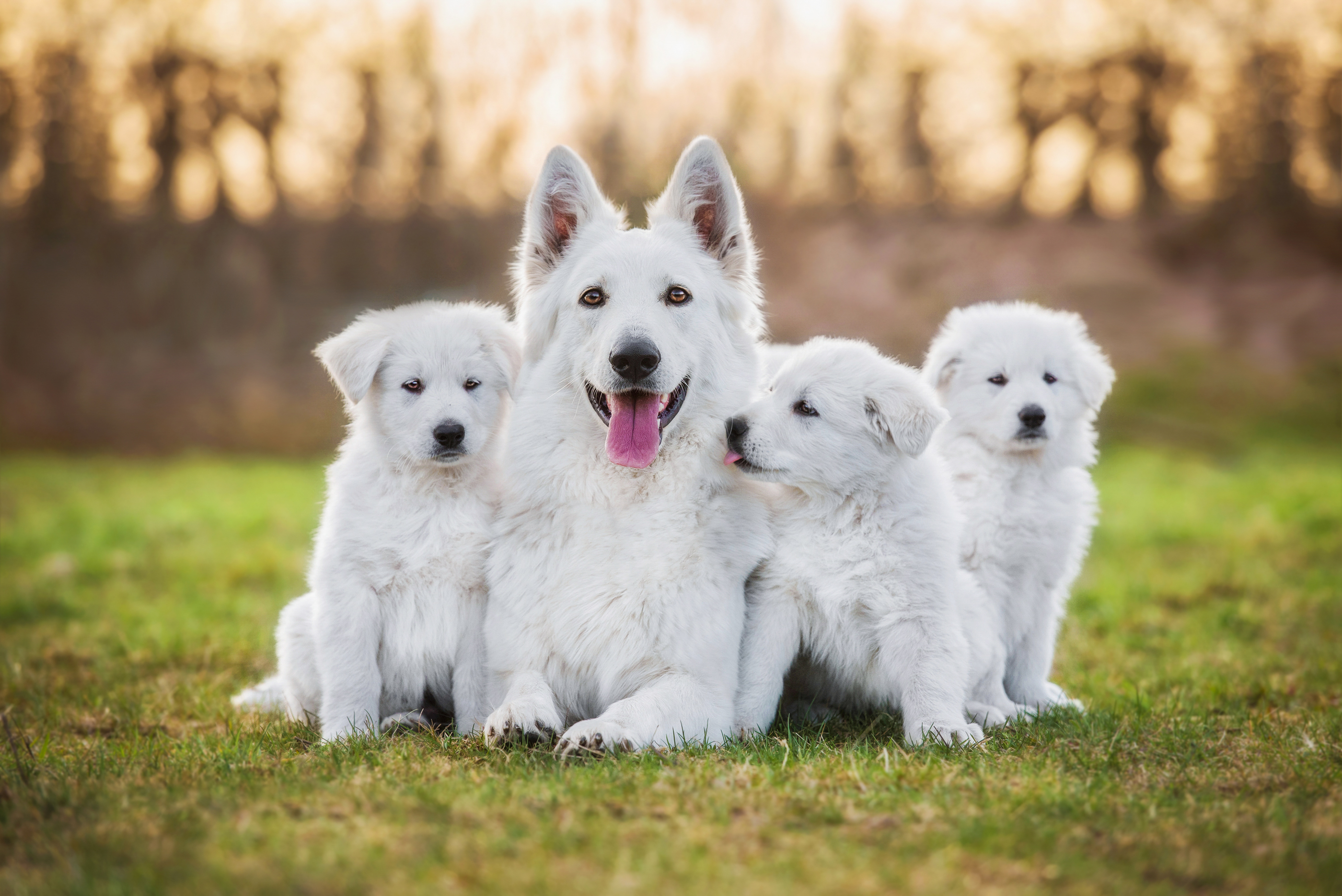 Adult dog with puppies