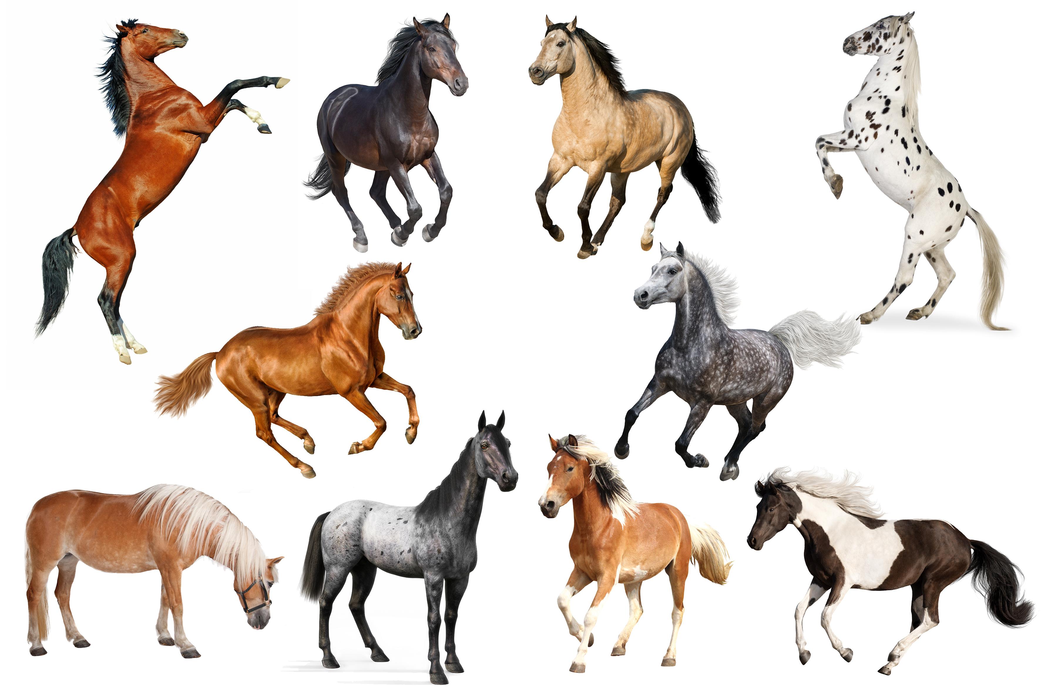 coat colours horses