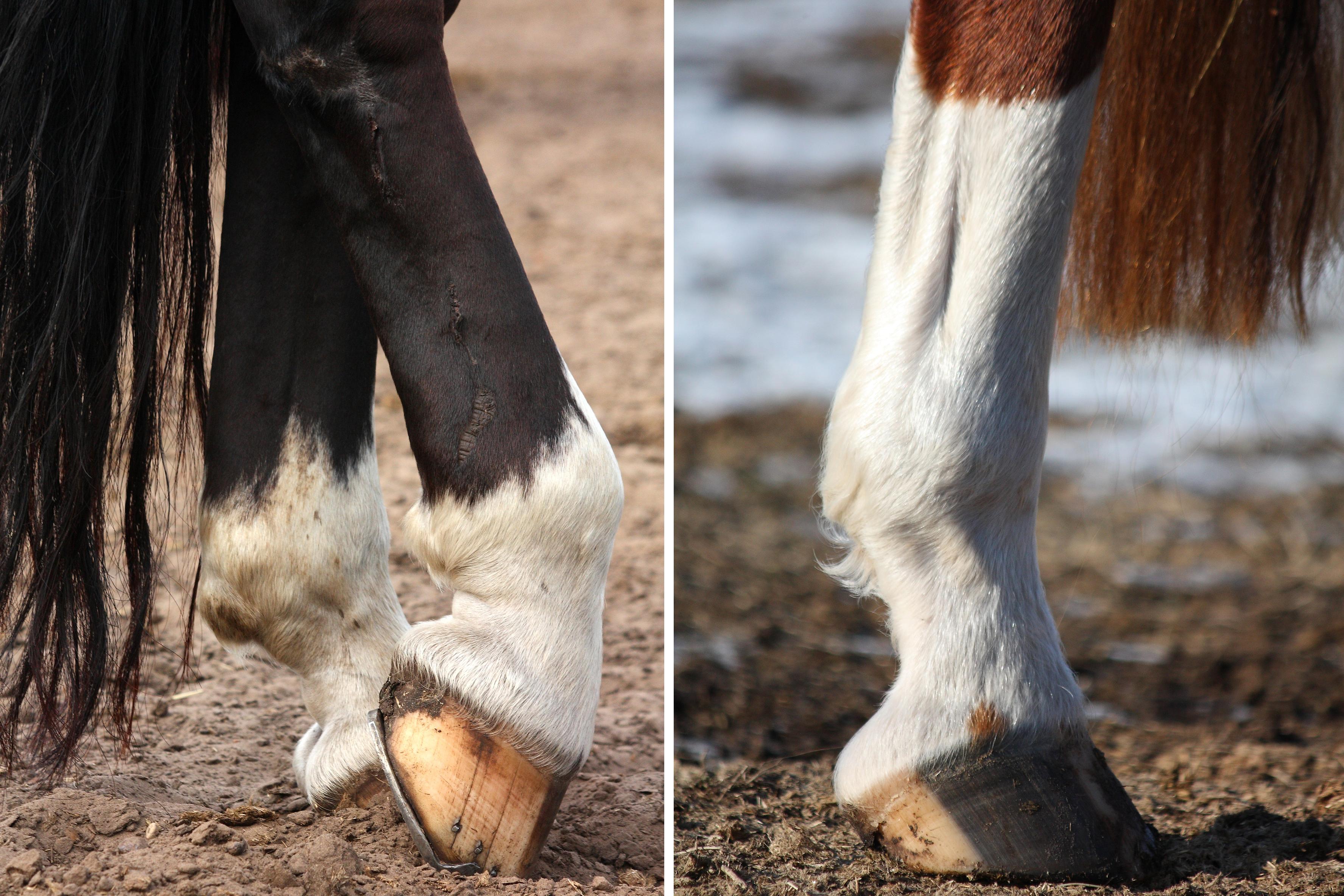 horse leg markings socks stockings